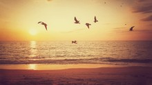 Sunrise And Flying Birds Over The Sea