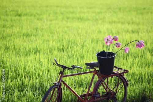 Fototapeten Natur classic bicycle with lotus flower