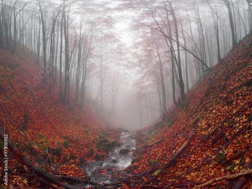 strumien-w-zlotym-lesie