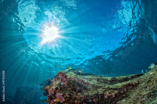 Spoed Foto op Canvas Koraalriffen diving in colorful reef underwater
