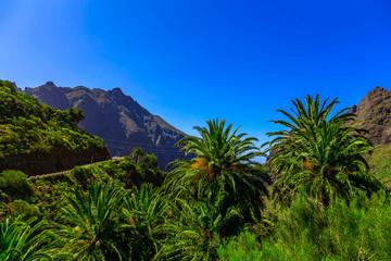 Fototapeta na wymiar Palms in Mountain