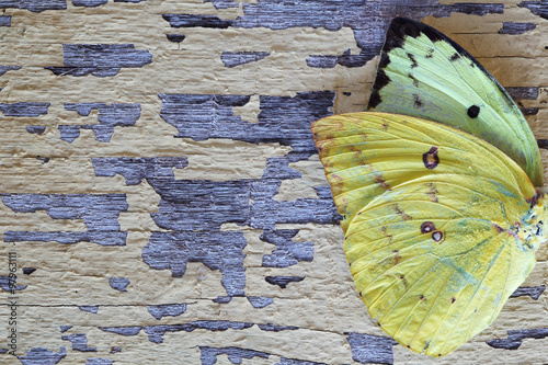 Photo sur Toile Papillons dans Grunge butterfly wing on grunge background