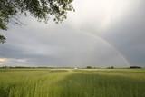 Fototapeta Rainbow - Po burzy