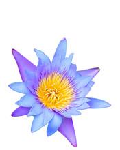 Beautiful Lotus Flower Isolated On White Background