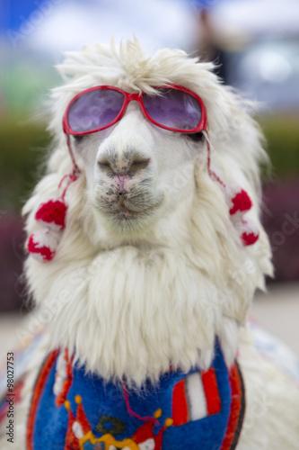 Staande foto Lama White lama wearing sunglass and a colored scarf, Peru