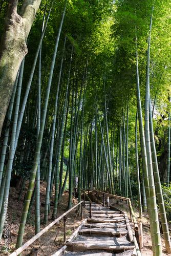sciezka-w-srodku-bambusowego-lasu-w-kioto