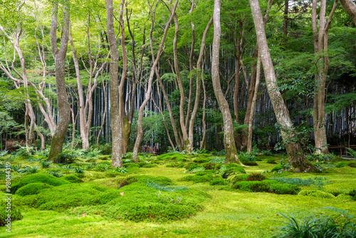 Foto op Plexiglas Bamboe Moss garden view in Arashiyama, Kyoto