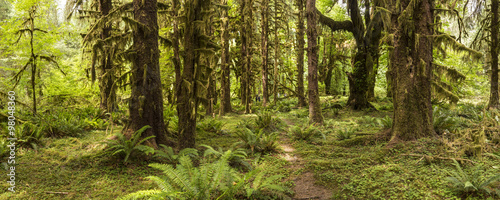 Wall Murals Forest Hoh Rainforest Panorama