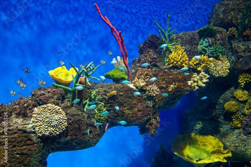 Tuinposter Koraalriffen Coral Reef and Tropical Fish in Sunlight