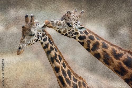 zyrafa-para-zakochanych-walentynki-tlo