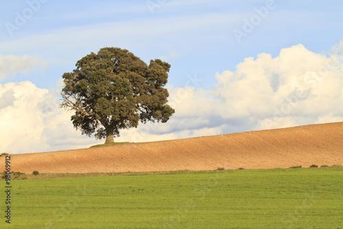 Fotografia, Obraz  Spring landscape