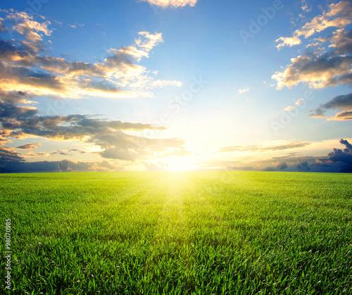 Sunset on field - 98070985