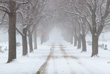 Snowy Tree Lined Road Through A Cemetary