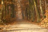 Lasy Wierzchosławice