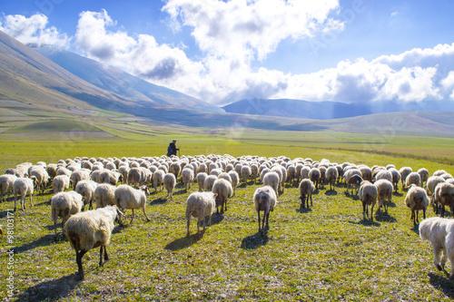 pastore con gregge di pecore sui monti Sibillini, Italia Fotobehang