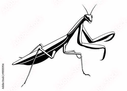 Fotografie, Obraz  Illustration of the mantis