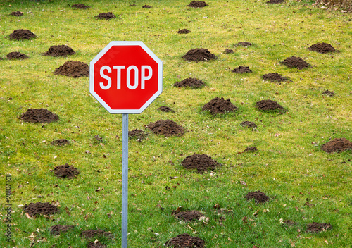 Fotografie, Obraz  Stop to garden damage  by mole