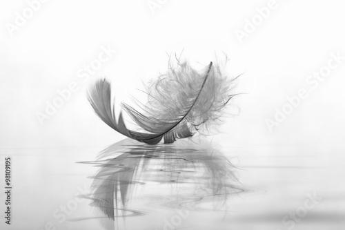 Fotografie, Obraz  Feder auf Wasser Abschied