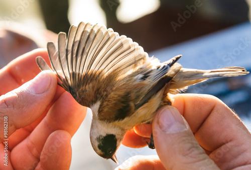 Apertura alare di uccello, fuoco selettivo Canvas Print