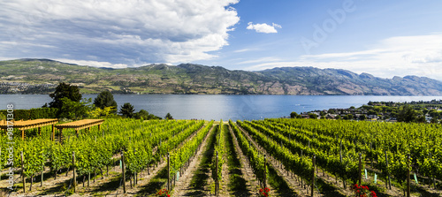 Canvas Prints Vineyard Summer Winery View