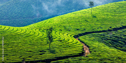 Garden Poster Lime green Green tea plantations in Munnar, Kerala, India
