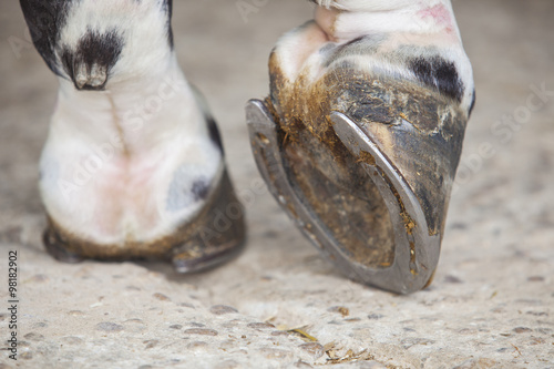 Poster Paarden Detailed view of horse foot hoof outside stables