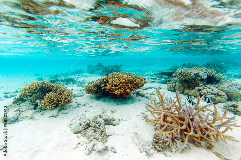 Fototapeta Shallow Water Coral Reef