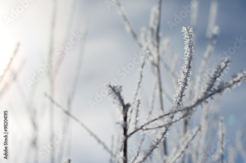 Staande foto Paardebloemen en water ice crystals cling to branches with a grey-blue background