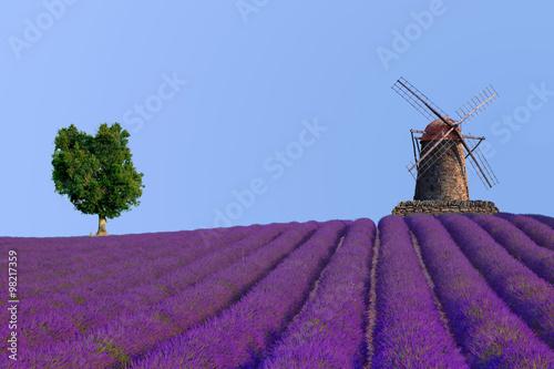 Poster Prune Lavendelfeld mit Mühle und Baum, Südfrankreich