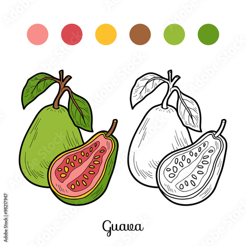 coloring book fruits and vegetables guava