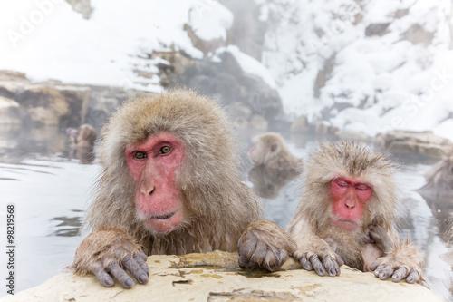Foto op Plexiglas Aap 温泉を楽しむおさるさん Japanese monkey enjoys an outdoor bath