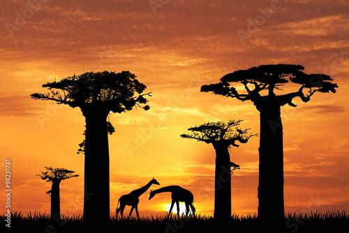 Foto baobab silhouette at sunset