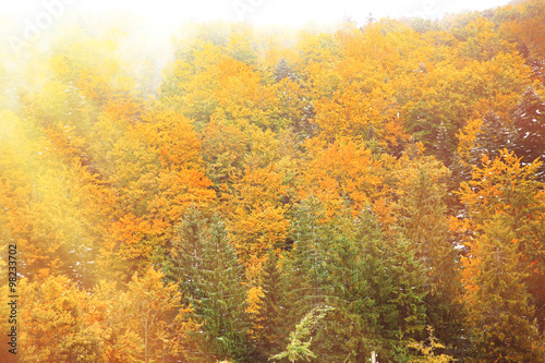 Photo Stands Roe Autumn mountain forest