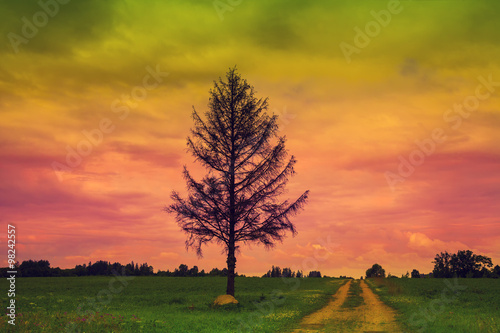 Papiers peints Corail Lonely tree near the road through the field