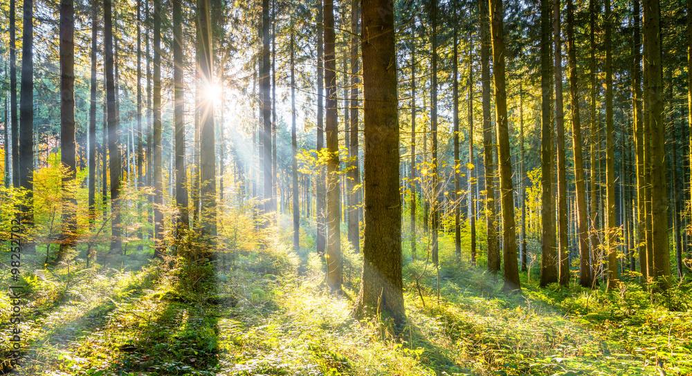 Fototapety, obrazy: Wald im Sonnenschein
