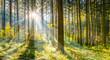 canvas print picture - Wald im Sonnenschein