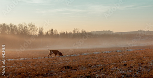 Photo sur Aluminium Chasse Autumn landscape with a hunting dog.