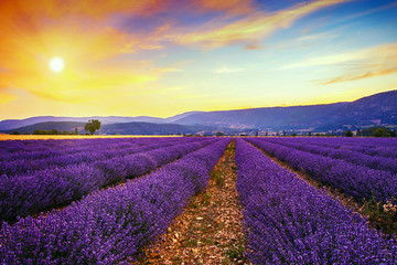 Panel Szklany Lawenda Lavender field summer sunset