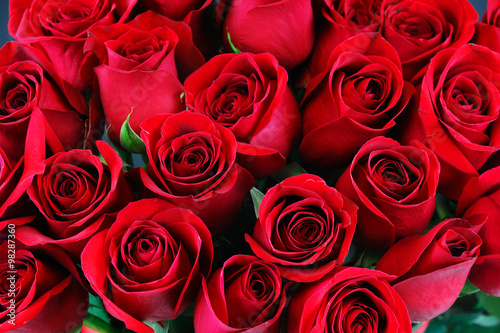Poster Roses red rose background