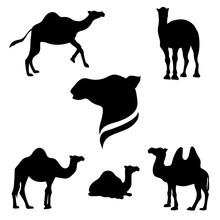 Camel Set Vector