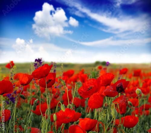 Fototapeta Summer wildflowers obraz na płótnie