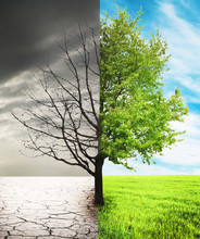 One Tree In Field