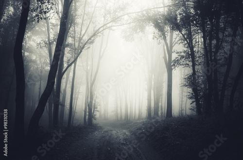 Valokuvatapetti dark forest fog