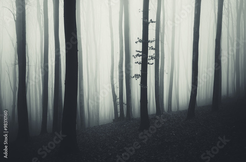 minimal forest landscape with fog