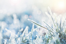 Winter Background, Morning Frost On The Grass With Copy Space