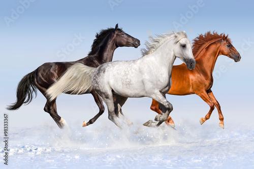 czerwony-czarny-i-bialy-kon-biega-cwal-przy-snieznym-polem