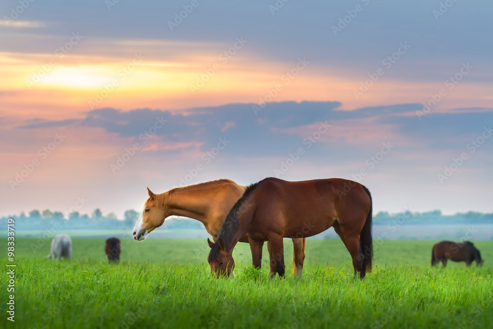 Fototapety, obrazy: Horse herd on pasture at sunrize