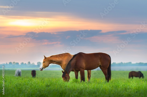 Foto op Canvas Paarden Horse herd on pasture at sunrize