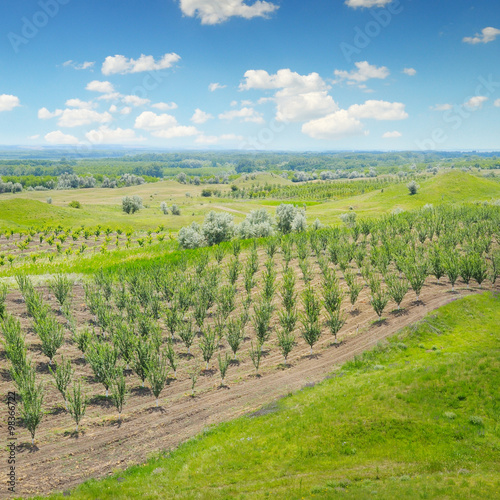 Poster Heuvel orchard, green meadows and blue sky