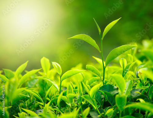 Staande foto India Morning grass